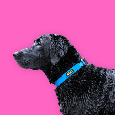 DeWater Waterproof Collar - Blue