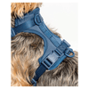 Cushioned Dog Harness - Navy