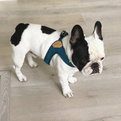 Buckle-Up Easy Harness - Blue