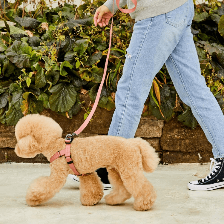 Adjustable Handle Dog Leash - Dusty Rose