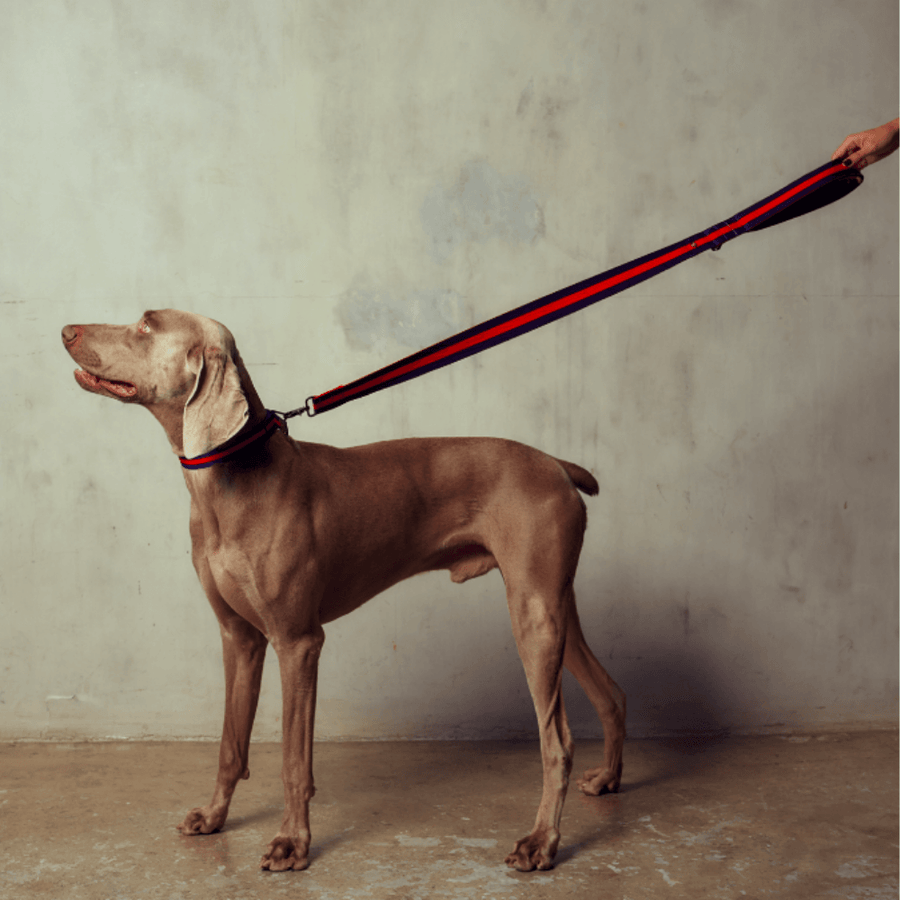 The City Leash Padded - Rue St Honore Leash Saint Rue