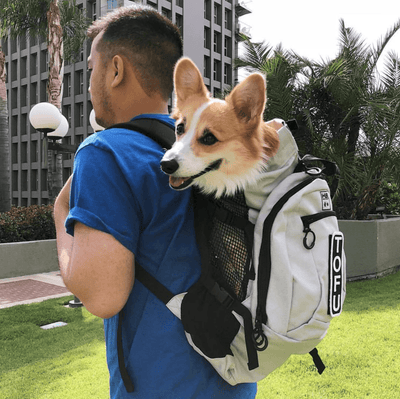 88d67ad7ff0a02 K9 Sport Sack Air Plus Dog Carrier Backpack | Spotted By Humphrey