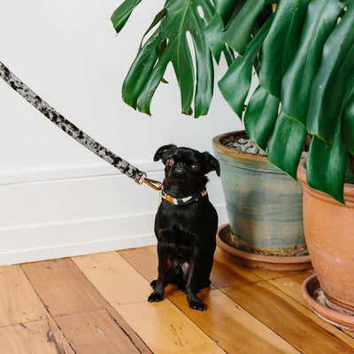 Velvet Dog Leash - Sage Leash Nice Digs
