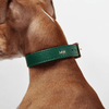 Classic Royal Green Leather Dog Collar