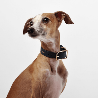 Classic Navy Leather Dog Collar