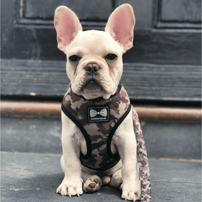 Reversible Harness - Sergeant Stripe