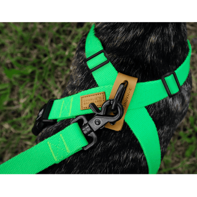 Field Leash - Neon Green