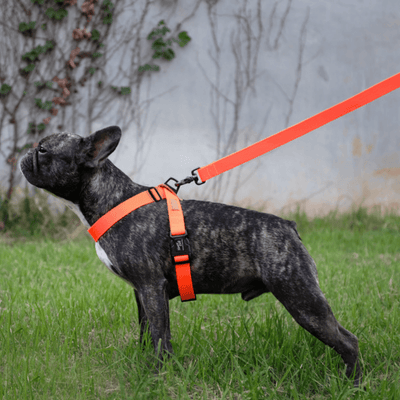 Field Leash - Neon Orange
