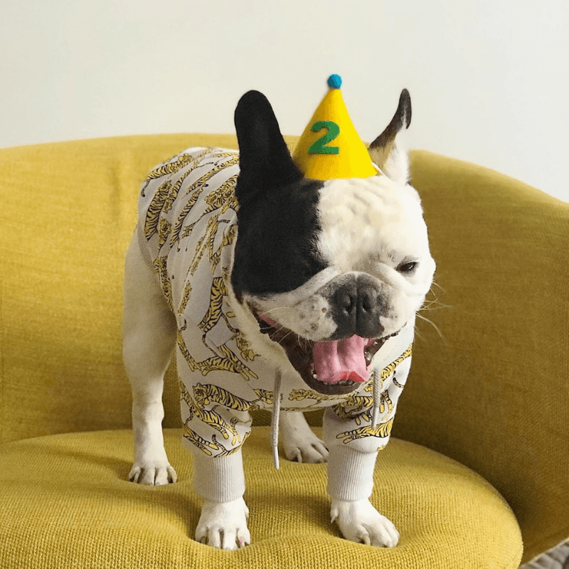 Numbered Pawty Hat