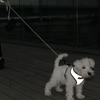 Visibility Rope Leash (Reflective!) Leash Paikka