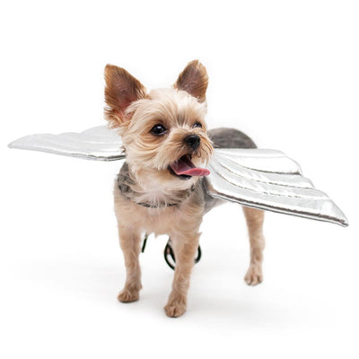 Angel Wings Dog Costume