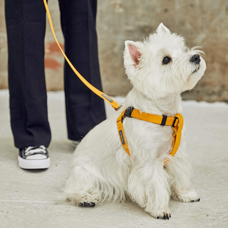 Adjustable Handle Dog Leash - Mustard Yellow