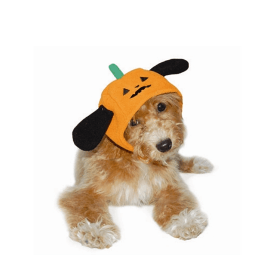 Pumpkin Dog Hat