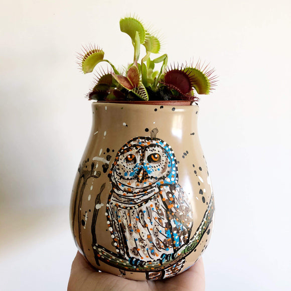 Owl 5inch planter pot Heather Freitas