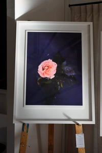 """Rose and Fall"" by Stacey Weaver - Limited Edition Fine Art Print. Available exclusively online at Studio Home ART HOUSE / home of exciting New Zealand Art"