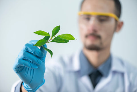Lab Working Holding Up Leaf - KryptoKratom.com