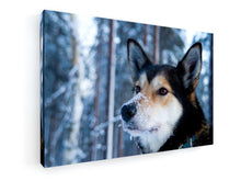 Load image into Gallery viewer, Stretched Canvas Classic – Premium - Husky