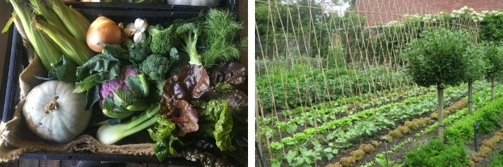 grow organic sustainable vegetables