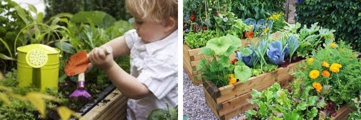 Sustainable vegetable garden with kids
