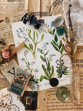 Load image into Gallery viewer, S&S signature vintage Ephemera & styling prop collections ~ forget me not