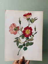 Load image into Gallery viewer, Vintage Rose Illustration Bookplate 4