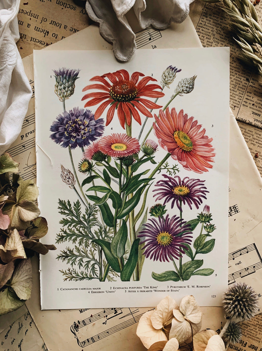 Vintage 1960's Floral Bookplate ~ Echinacea