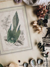 Load image into Gallery viewer, Antique Bird Print