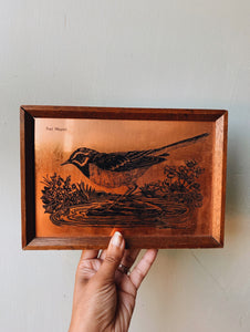 Vintage Copper Pied Wagtail Artwork