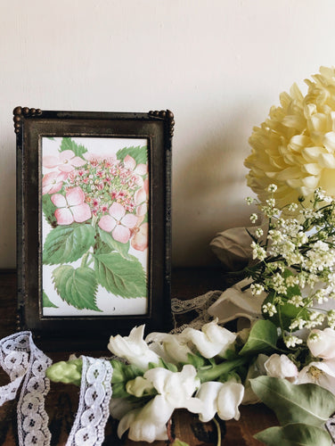 1920s Vintage Frame and Hydrangea Bookplate