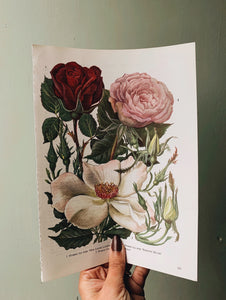 Vintage 1960's Bookplate ~ Rose 2