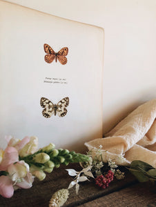 Antique Large Illustration The Copper & Brown Hairstreat Butterflies  Bookplate