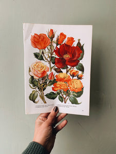 Vintage 1960's Floral Bookplate ~ Rose