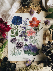 Vintage 1960's Floral Bookplate ~ Great Blue