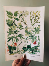 Load image into Gallery viewer, Vintage 1960's Floral Bookplate ~ Mistletoe