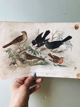 Load image into Gallery viewer, Vintage 18th Century Blackbird Bookplate