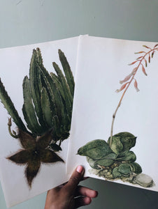 Vintage Large Cacti / Succulent Duo of Illustrative Bookplates