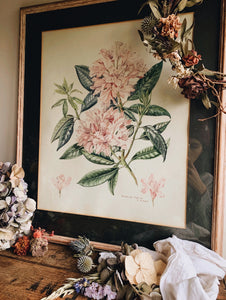 Vintage rhododendron hodgsonii Painting ~ Signed W.M (UK shipping only)
