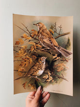 Load image into Gallery viewer, Vintage 1960's Bird Print 2