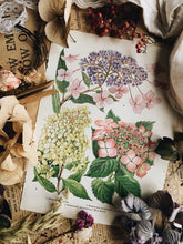 Load image into Gallery viewer, Vintage 1960's Floral Garden Bookplate ~ hydrangea
