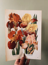Load image into Gallery viewer, Vintage 1960's Floral Bookplate ~ Iris