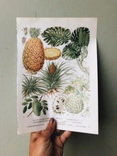 Load image into Gallery viewer, Vintage 1960's Pineapple Bookplate