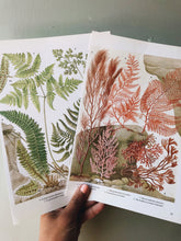 Load image into Gallery viewer, Two Vintage Fern & Seaweed Bookplates