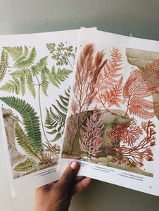 Two Vintage Fern & Seaweed Bookplates