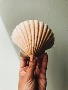 Large Vintage Clam Shell