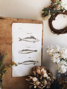 Antique Fish Etching Bookplate