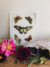 Load image into Gallery viewer, Vintage Style Butterfly Print 1