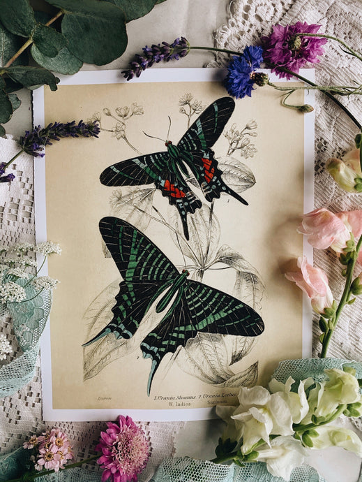 Vintage Style Butterfly Print