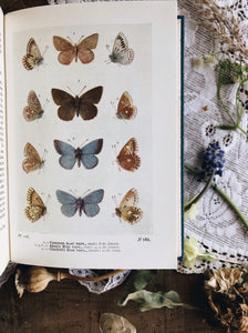 Vintage Book ~ The Butterflies of the British Isles ~ Richard South