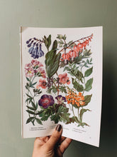 Load image into Gallery viewer, Vintage 1960's Floral Bookplate ~ Discentra Hearts