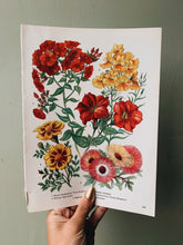 Load image into Gallery viewer, Vintage 1960's Floral Bookplate ~ petunia